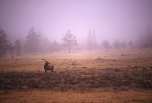 Deer Hunting in California